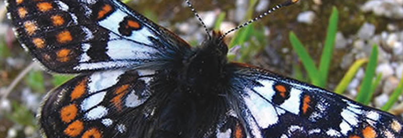 Butterfly and Moth Tours in Bulgaria »