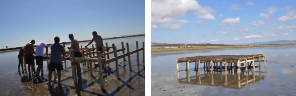 Improving nesting conditions for terns and avocets at Pomorie Lake, Bulgaria, thanks to support from  the British-Bulgarian Society