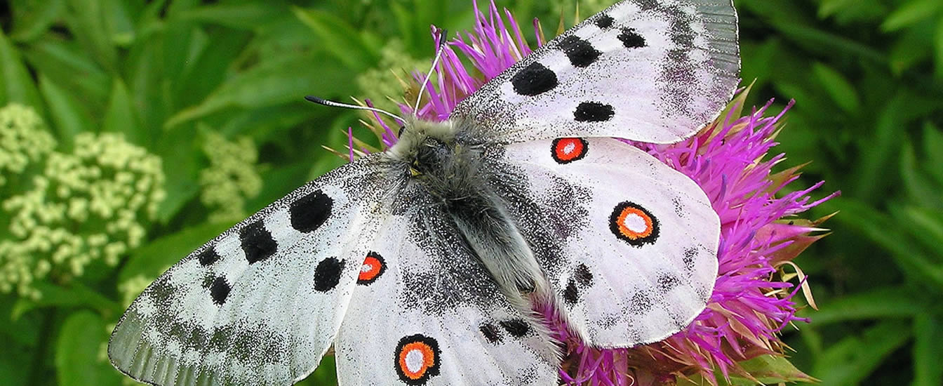 Moths/Butterflies of Bulgaria
